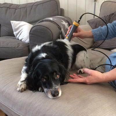 Laserbehandling hund
