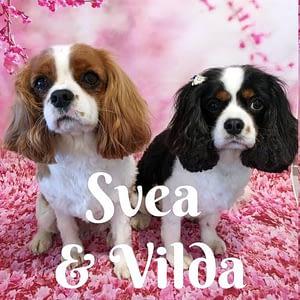Svea_Vilda