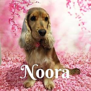 Noora