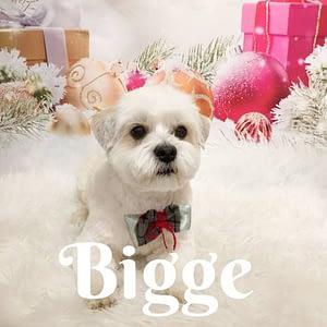 Bigge