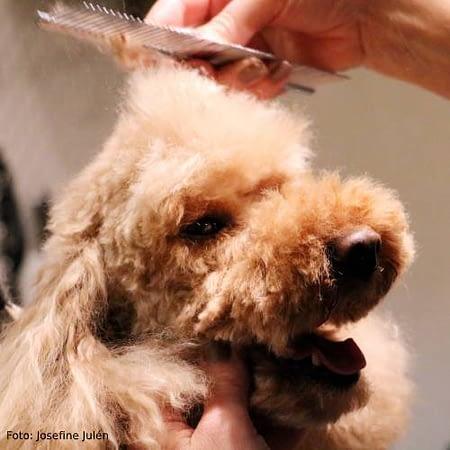 Hundklippning, klippkurs