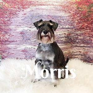 Morris_Scn