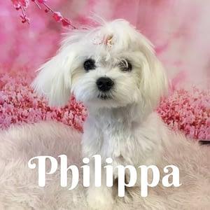 Philippa
