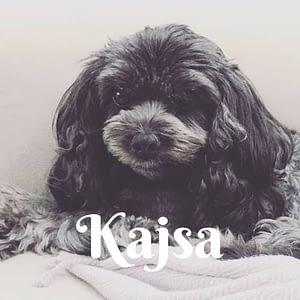 Kajsa4