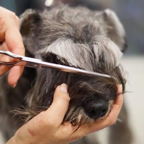 Pälsvård hund
