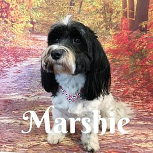 Marshie